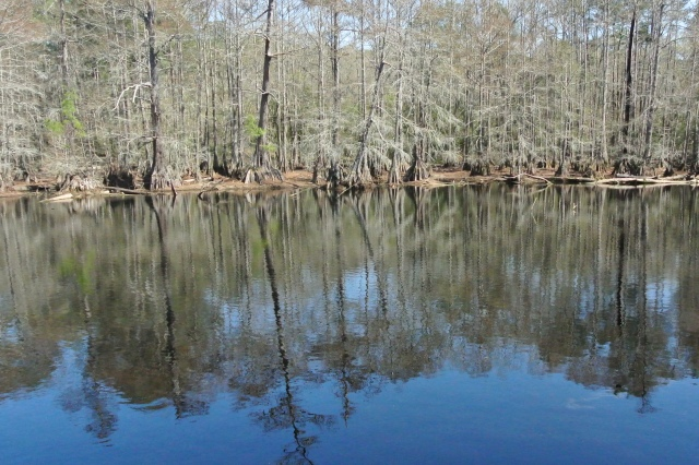 Beautiful reflections across the water. The Cypress trees were just awesome....click to view larger!
